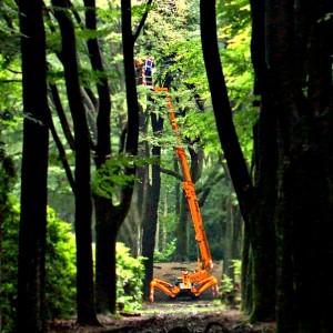 groot boom onderhoud
